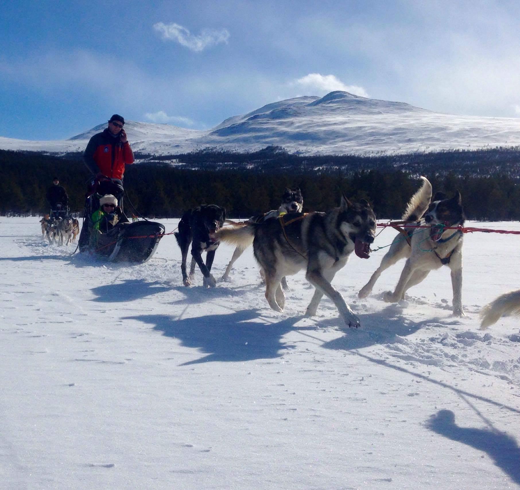 Dogsledding in Sjodalen